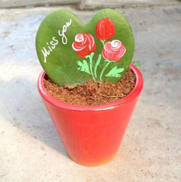 小盆栽情人球兰 精品工艺仙人掌多肉植物 心叶球兰