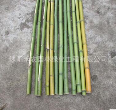 批发各种规格细竹竿子 菜园搭架 篱笆豆角量大规格全可定做