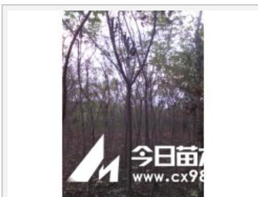 河北火炬树