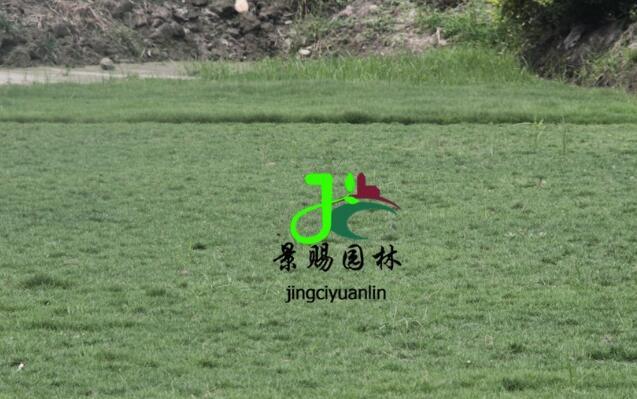 成都混播草坪