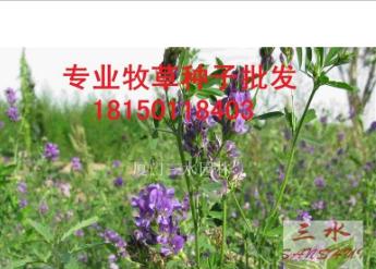 紫花苜蓿|25kg/袋