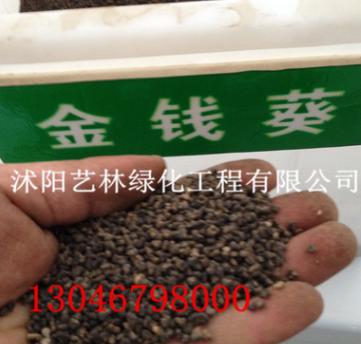 新款进口草坪草花药材 东葵果子 葵菜子金钱葵种子厂家批发
