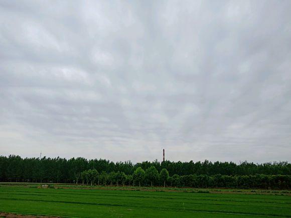 邯郸、邢台地区低价出售优质草坪