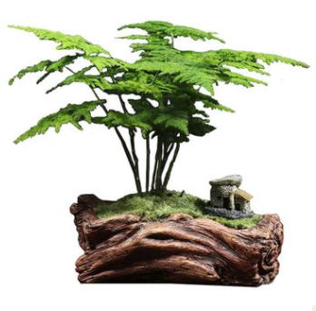文竹盆栽植物室内客厅办公桌面花卉微盆景净化空气吸甲醛四季常青
