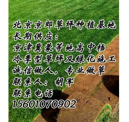 朝阳销售草坪昌平销售草坪大兴销售草坪