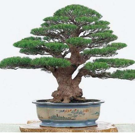 南阳市天港园林绿化工程有限公司销售盆景艺术
