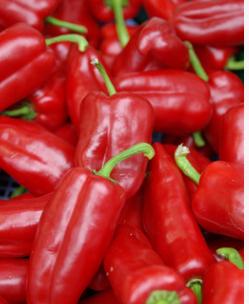 蔬菜种子 春秋红泡椒种子 泡辣椒 辣味浓 鲜食晒干椒做泡椒 高产