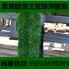 南阳草坪真四季青冷季型早熟禾草皮活小区别墅景区护坡绿化带草坪