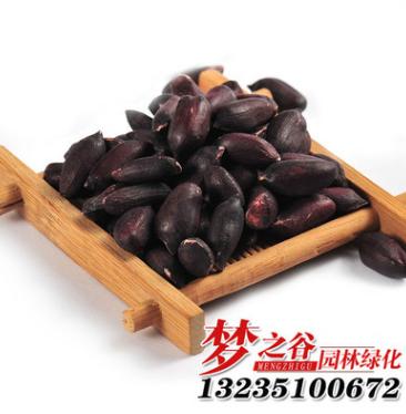 批发黑花生种子 黑皮紫花生蔬菜高产农作物种子 出芽率高