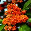 花卉养殖及销售
