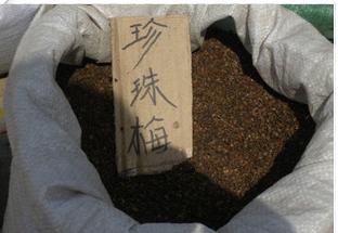 低价供应花木种子 中药材种子 灌木种子 珍珠梅种子批发