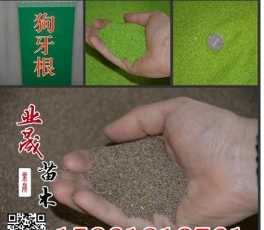 狗牙根草籽价格 沭阳狗牙根草籽价格 发芽率高狗牙根草籽价格