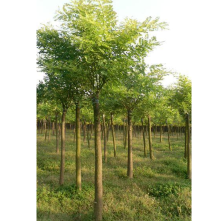 供应一棵树的价值