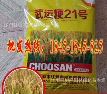 批发高产水稻种子武运粳21号中熟中粳类型食味和口感好免运费