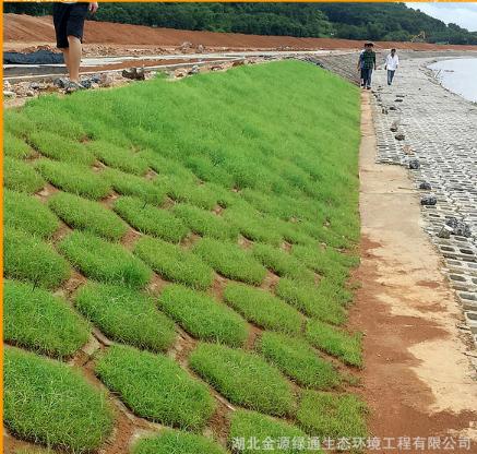 植被型生态混凝土护坡绿化添加剂 可抗冲刷