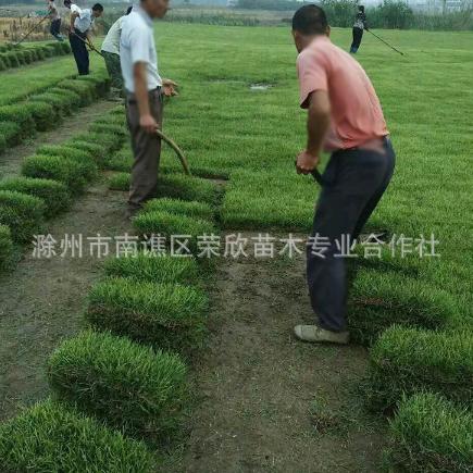 虎皮草 人造草坪仿真运动草坪塑料假草坪幼儿园人工草皮1