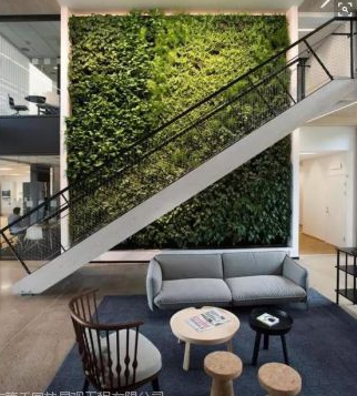 厦门绿墙垂直绿化背景墙设计室内景观工程施工