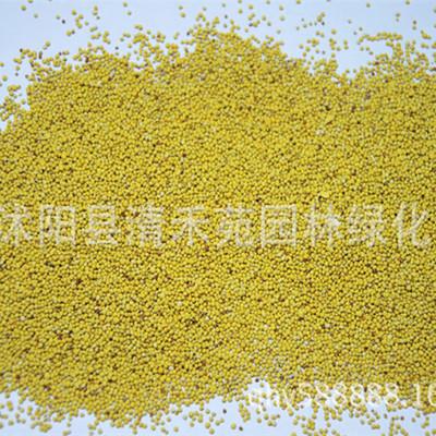 批发进口草种 三叶草草种 白三叶草籽 发芽率高 货到付款