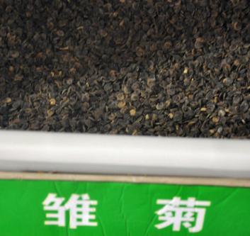 实体店批发进口草坪草花 雏菊种子 混色 迷你型 高品质 放