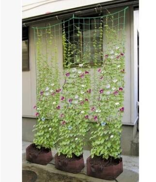 加粗30股线 园艺网 1.8米*0.9米爬藤网 外贸园艺爬藤植物用