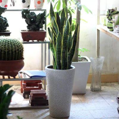 虎皮兰小型盆栽办公室桌面虎尾兰绿植卧室花卉吸甲醛净化空气