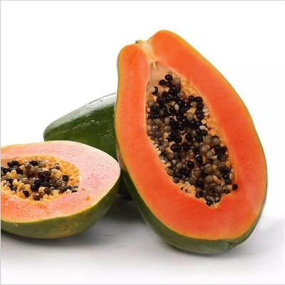 批发直销红心木瓜果树2年树热带水果树红心木瓜树包邮红肉木瓜树