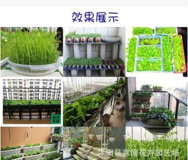 批发 四季油菜种子 有机绿色蔬菜种子 阳台菜园种植盆栽 100粒/袋