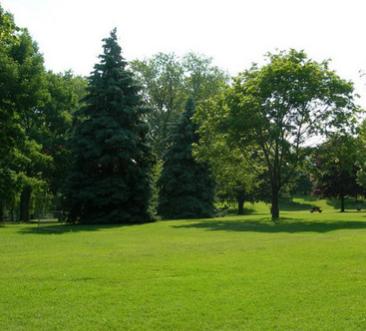 园林庭院耐寒草坪种子 脱壳狗牙根/百慕大 球场专用草籽