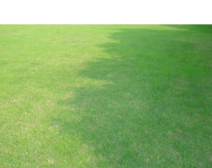 基地直销工程绿化草皮【品种齐全 质优价廉 看货起苗】