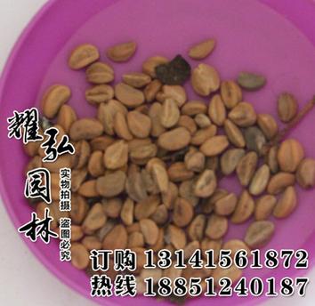 常年供应当年新采果树苗木种子 果树山楂种子 确保品种质量