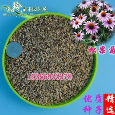 批发2018年新种子松果菊种子绿化盆栽花境紫锥花种子紫锥菊包邮