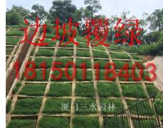 暖季型草种狗牙根大量供应包衣狗牙根草籽 耐踏型护坡草坪种子 绿化草种批发