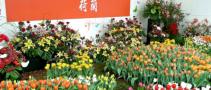 2019上海人造草坪及仿真植物展【2019上海锦鲤展讯】