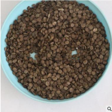 林木种子批发 红花槐种子价格 厂家直销 黄花槐种子销售 包发芽