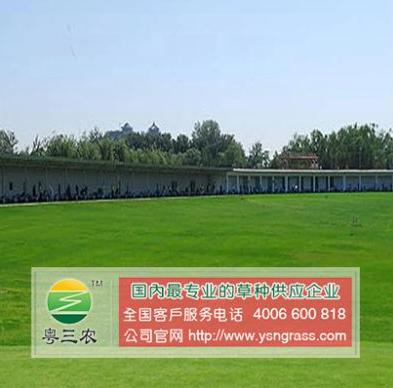 厂区绿化草坪草籽价格