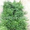 优质袖珍椰子盆栽观叶绿植四季常青耐阴