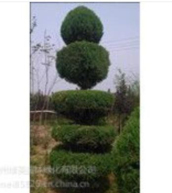 【绿化工程】 锦州绿美园林绿化工程有限公司13941636167