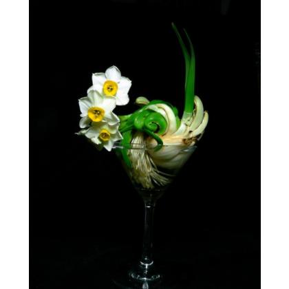 销售水仙花种球 洋水仙种球 大溪地岛 盆栽水仙花种球