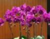 上海闵行绿亮花博园蝴蝶兰比网购便宜一半