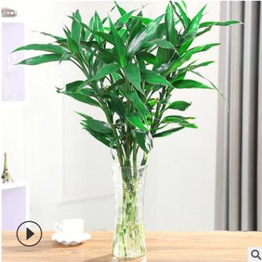 批发富贵竹大叶竹客厅办公室内桌面水培植物四季常青花卉盆栽绿萝