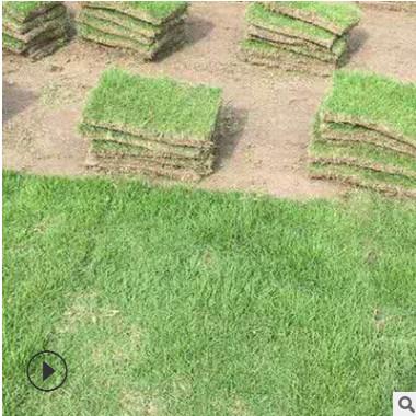马尼拉 果岭草 百慕大 台湾草 基地直销 各种绿化苗木 品种齐全