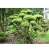 别墅绿化花木