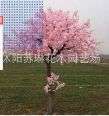仿真樱花树许愿树假樱花树大型客厅酒店装饰假桃花树婚庆仿真桃树 举报