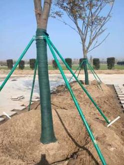 供应树木支撑杆树木支撑架树木支撑新型树木支架各种规格厂家直销