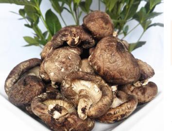 批发原木晒菇 秦岭野外椴木香菇干货 野生冬菇 带脚椴木肉菇500g