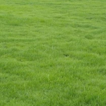 草坪特价百慕大狗牙根草坪天堂草坪价优