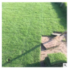 厂家直销小区护坡固土草坪耐寒耐旱别墅庭院绿化植物百慕大草皮