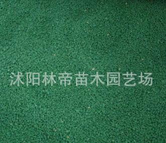 厂家直销结缕草草籽 优质结缕草草籽 欢迎咨询