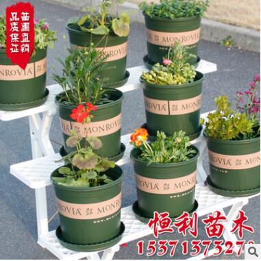 趣植园艺 环球印花1/2/3/5加仑盆 塑料花盆多肉花盆