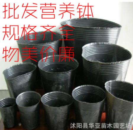 批发防老化营养钵 园艺营养杯 育苗袋黑色营养袋 育苗杯塑料花盆